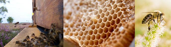 Abeilles, ruche et nid d'abeilles
